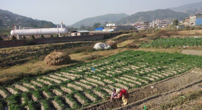 nala-farming