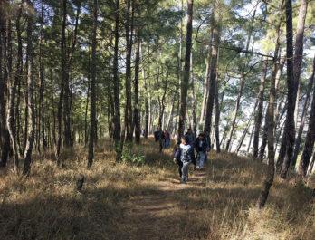 hiking-resort-to-champadevi-ascend